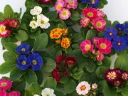 Цветы к 14 Февраля и 8 Марта