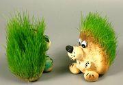 Травянчик - живой экосувенир.