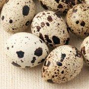 Домашнее мясо и яйца перепелов