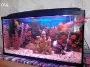 Продам укомплектованый аквариум