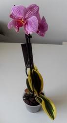 Большой выбор растений: цветущие,  декоративно-лиственные,  суккуленты