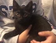 Котенок - мальчик. Чудо-малыш!